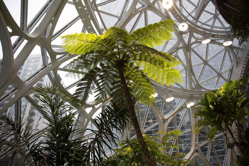 Pristor spoločnosti Amazon v Seattli udržuje tropické podnebie, podobné Kostarike alebo Indonézii.