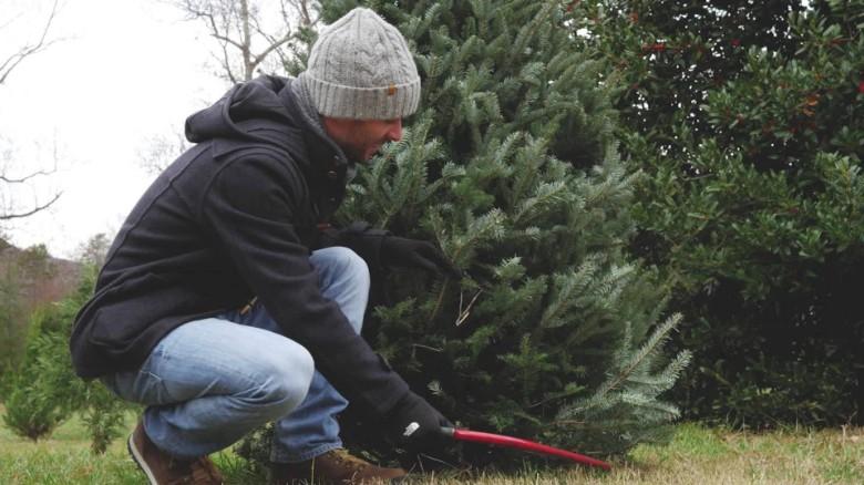 Preco_generacia_Milenia_kupuje_viac_vianocnych_stromcekov_ako_kedykolvek_predtym