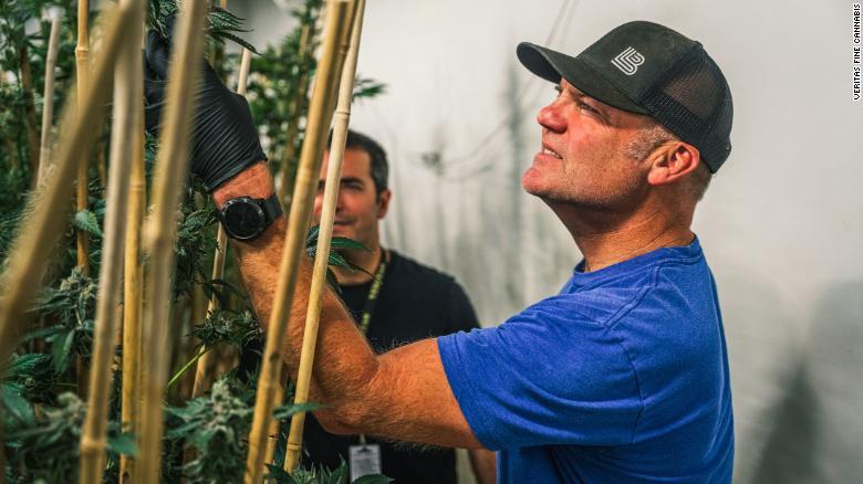 Dale Katechis, ktorého rovnomenná a najpredávanejšia značka piva - Dale's Pale Ale spôsobila revolúciu v oblasti remeselných pív, investoval do aktívnej vodcovskej úlohy vo veľkoobchode s butikmi s označením Veritas Fine Cannabis, ktorý sa špecializuje na kultiváciu a predaj prémiovej marihuany. Katechis (v popredí) je na snímke s generálnym riaditeľom spoločnosti Veritas - Mikeom Leibowitzom.